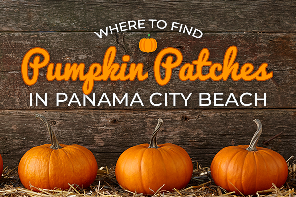 Where to find pumpkin patches in Panama City Beach, Florida